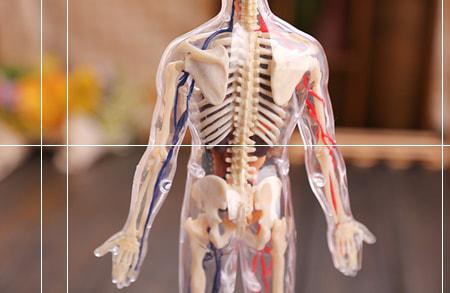 مشاهده محصولات مولاژ و مدل آناتومی